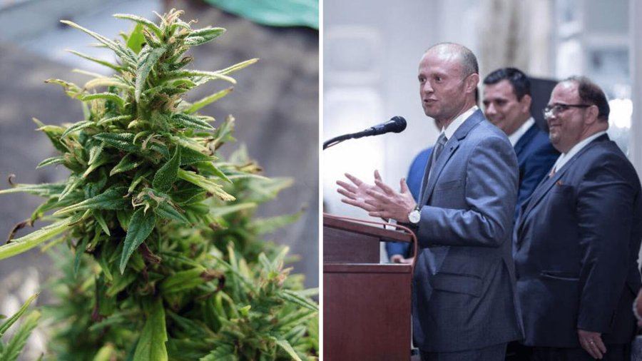 Malta will export cannabis worth €1billion