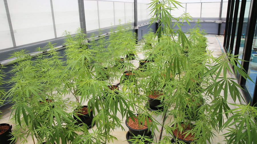 Exclusive sneak peek into the $1.3million Thai cannabis lab