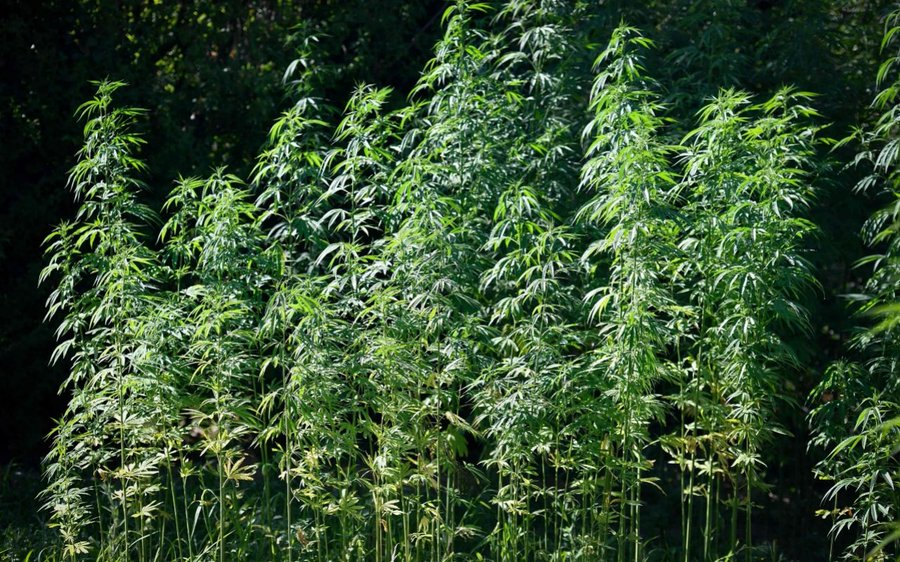 Thailand will further legalize hemp by 2020