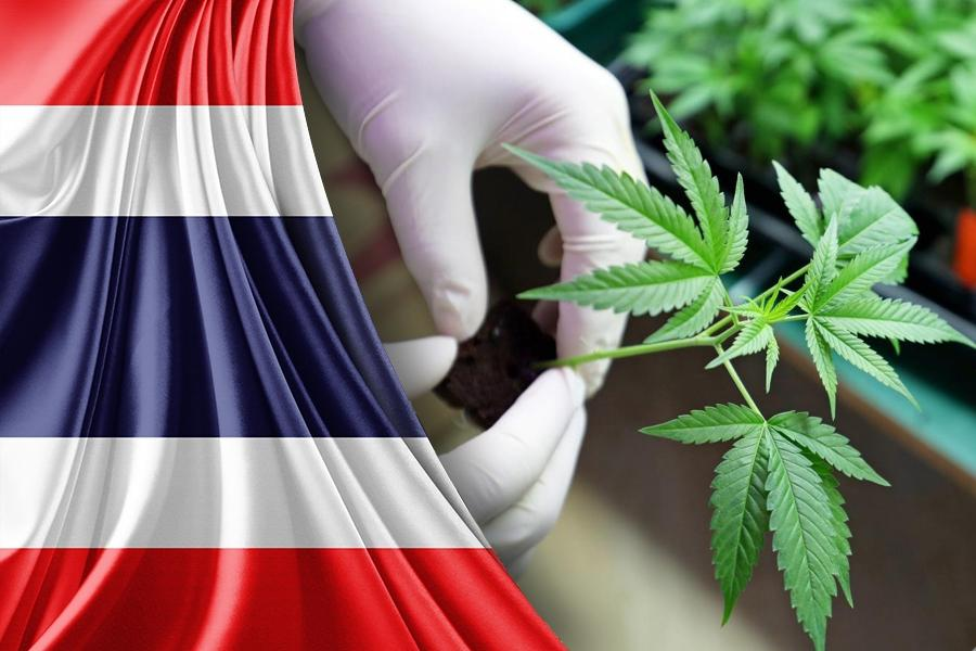 Medical cannabis legalization in Thailand